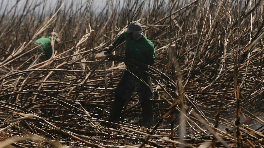 """""""Querem que trabalhador rural volte a fazer cocô no mato""""… – Veja mais em https://noticias.uol.com.br/colunas/leonardo-sakamoto/2020/03/03/querem-que-trabalhador-rural-volte-a-fazer-coco-no-mato-acusa-sindicato.htm?cmpid=copiaecola"""