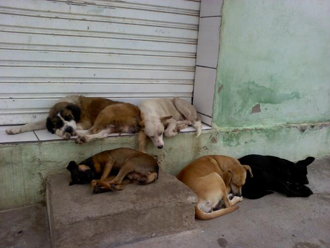 É inadmissível a matança de animais de Rua em Patos. Diz revoltado o vereador Zé Gonçalves.