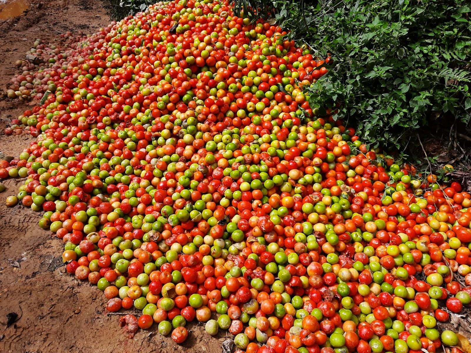 Toneladas de tomates são descartadas às margens de estradas no interior de SP
