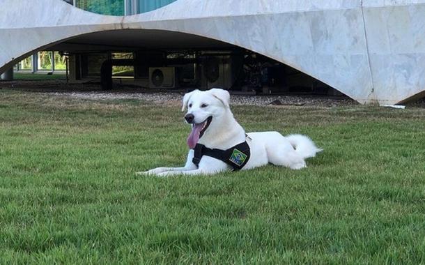 Cachorro adotado por família Bolsonaro já tinha dono e será devolvido
